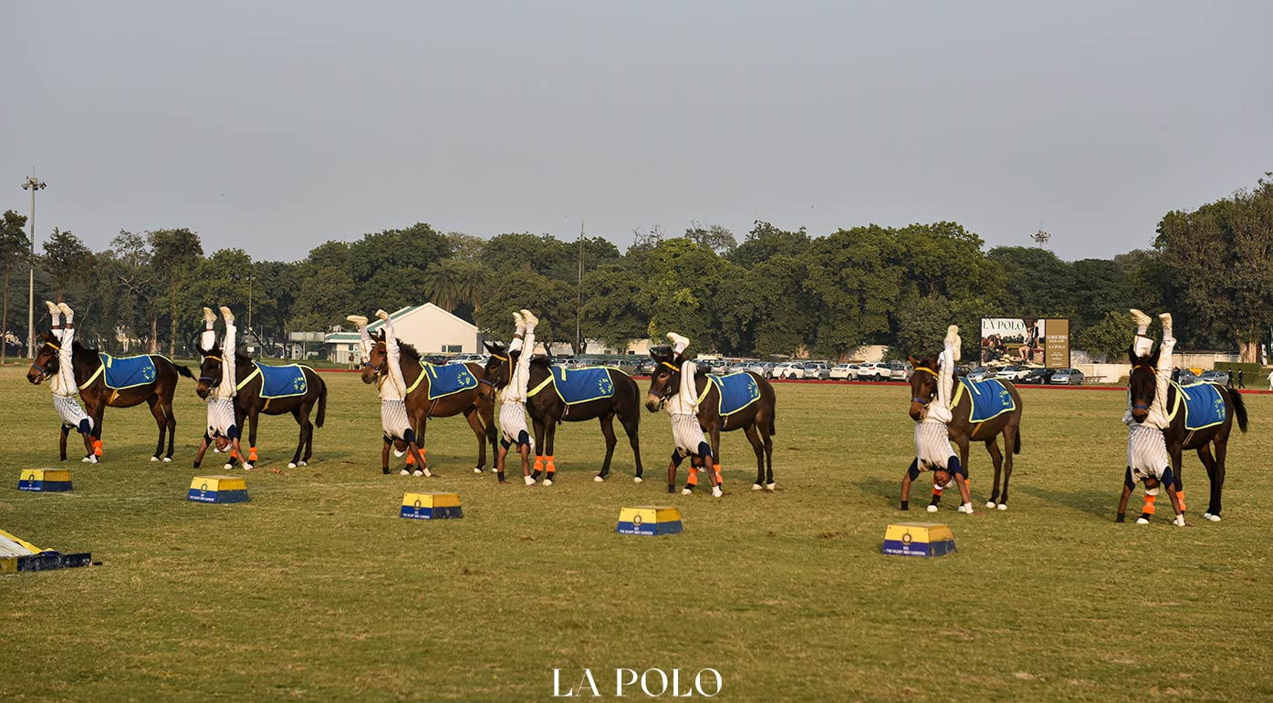 Mule Display- A Practice Of Discipline