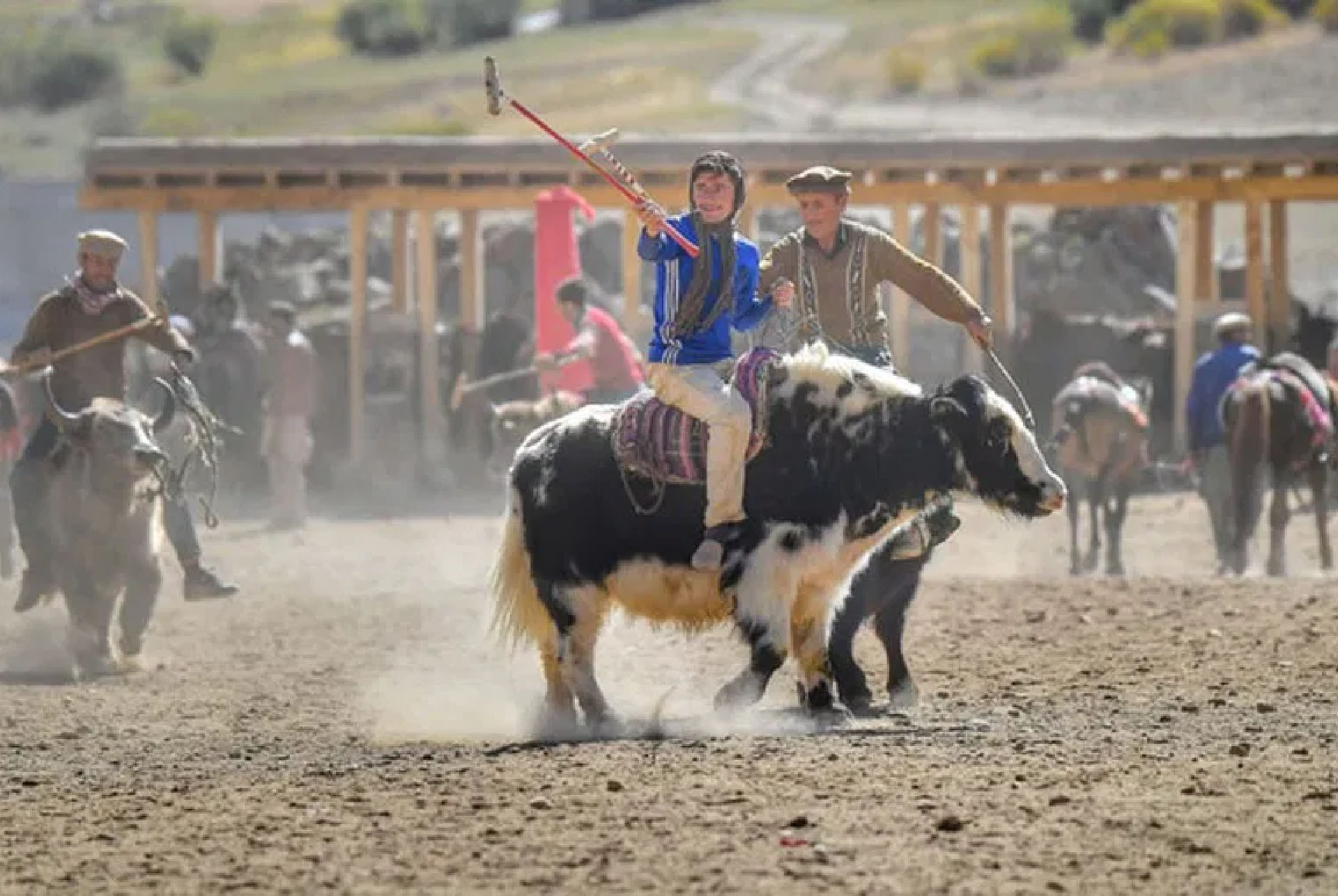 Yak Polo at Brohgil Festival