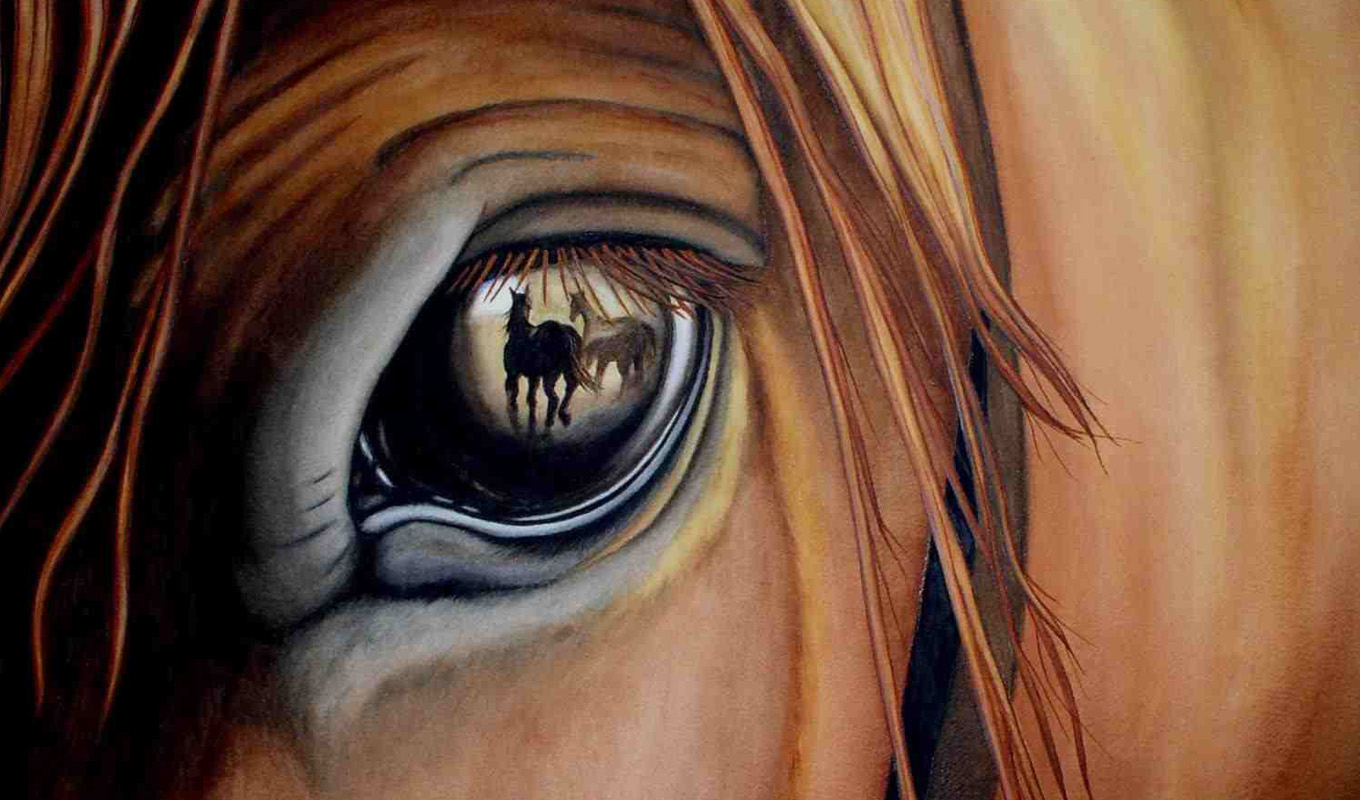 5 facts about horses, facts about horses, horse facts, horses, are horses color blind, horses are color blind, can horses see behind them, monocular vision, binocular vision, can horses see in the dark, do horses remember humans, do horses bite