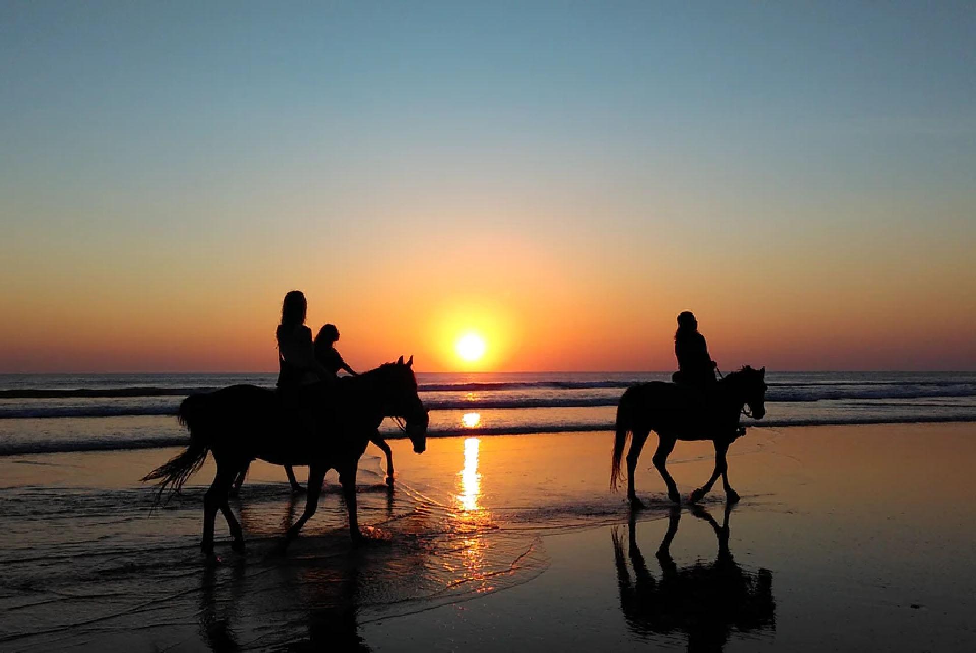 Equines love a rhythm