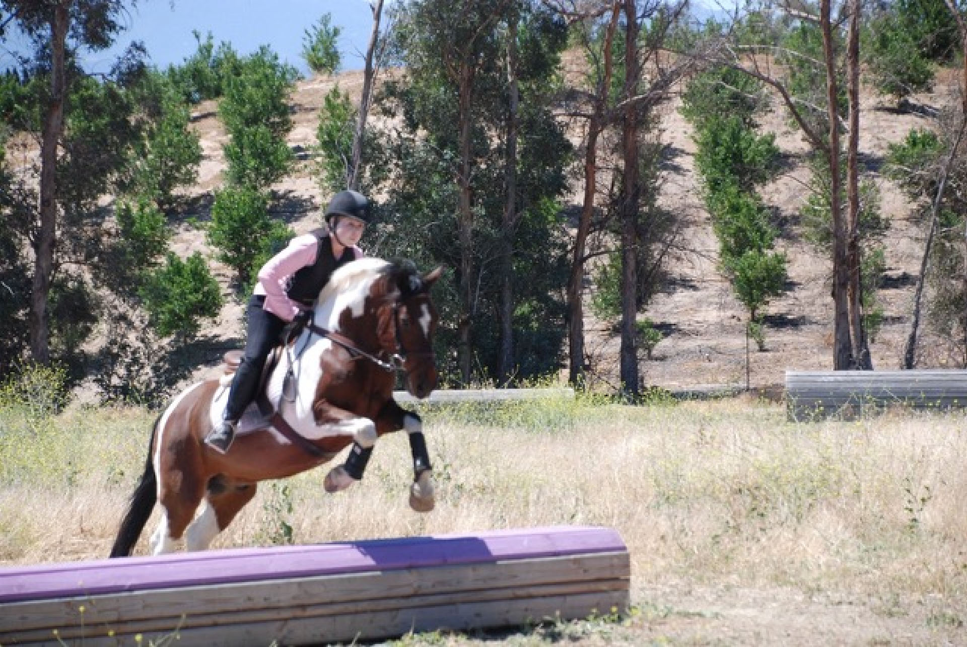 UNDERSTANDING HORSES