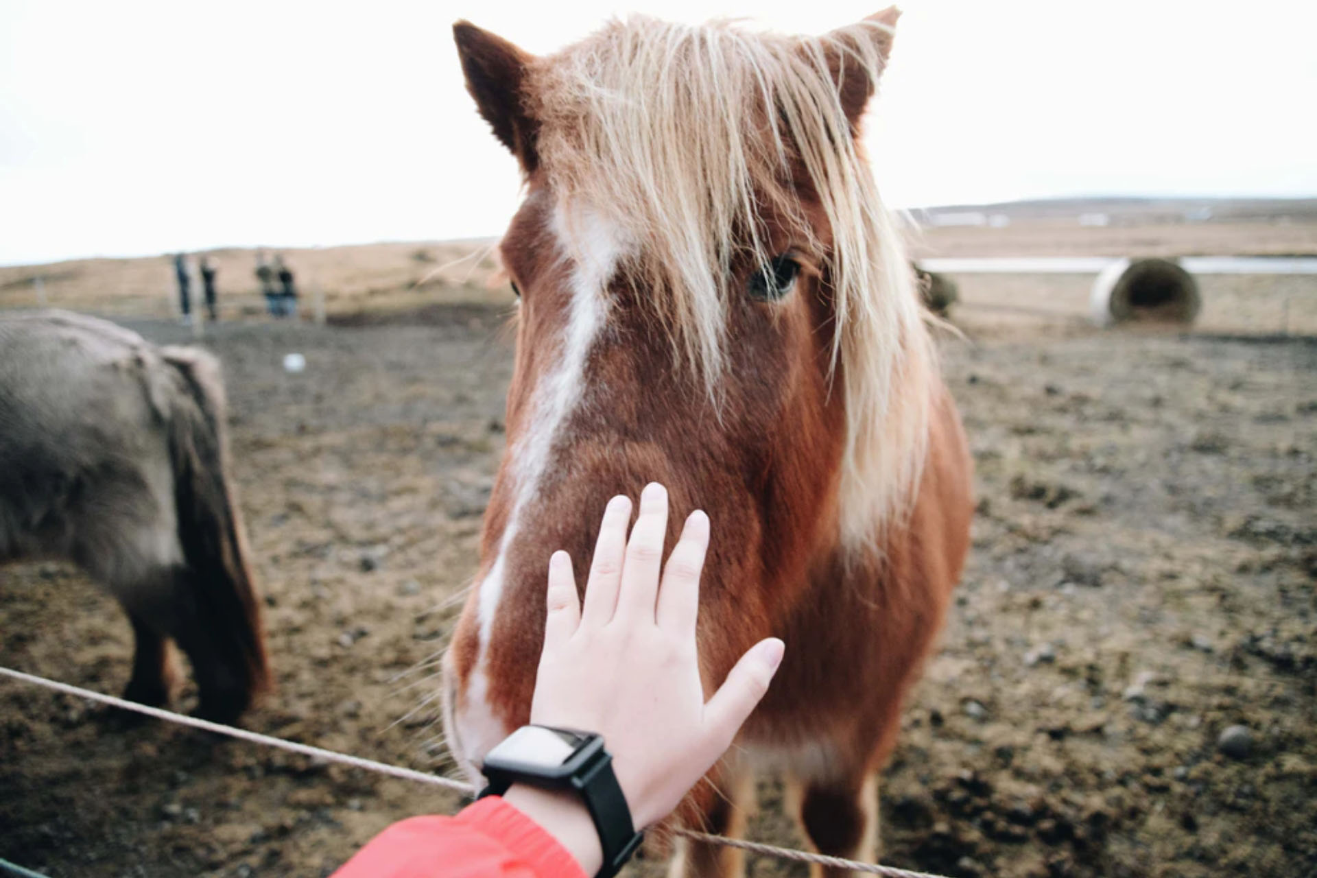 Horses are benefited by music. Read the whole research in association with Kendra Bruning