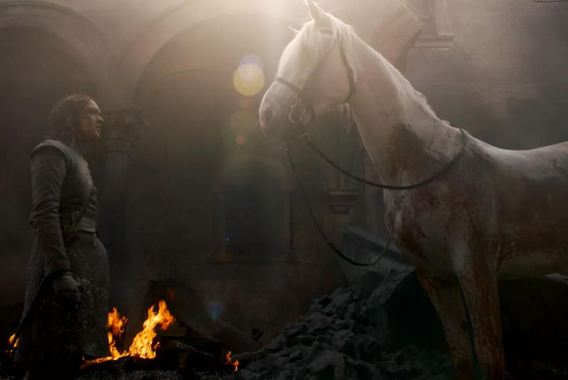 NETFLIX & HORSES