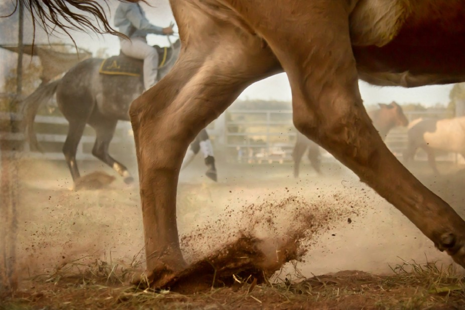 Injuries to horses