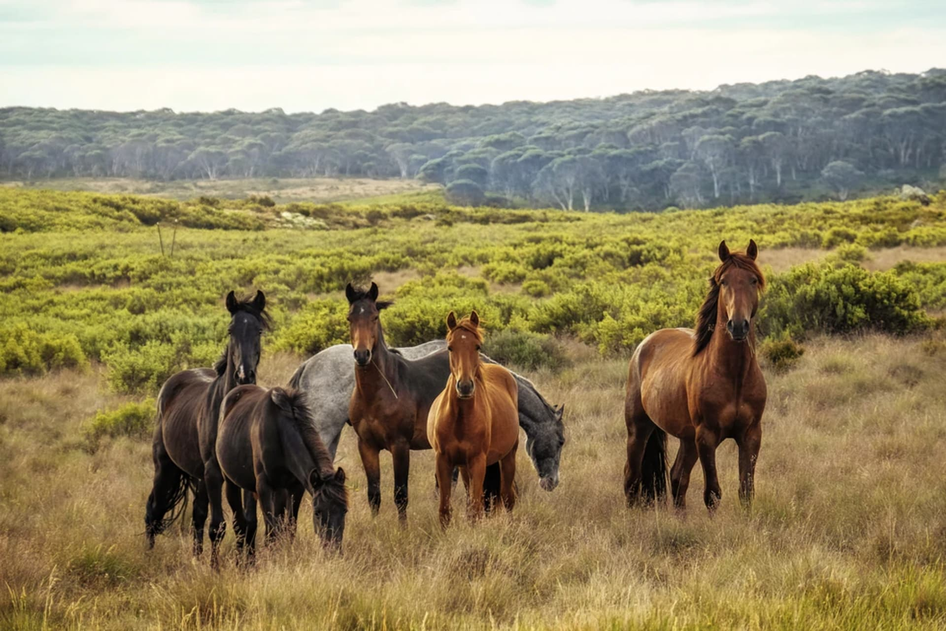Genteel Care of the Equine