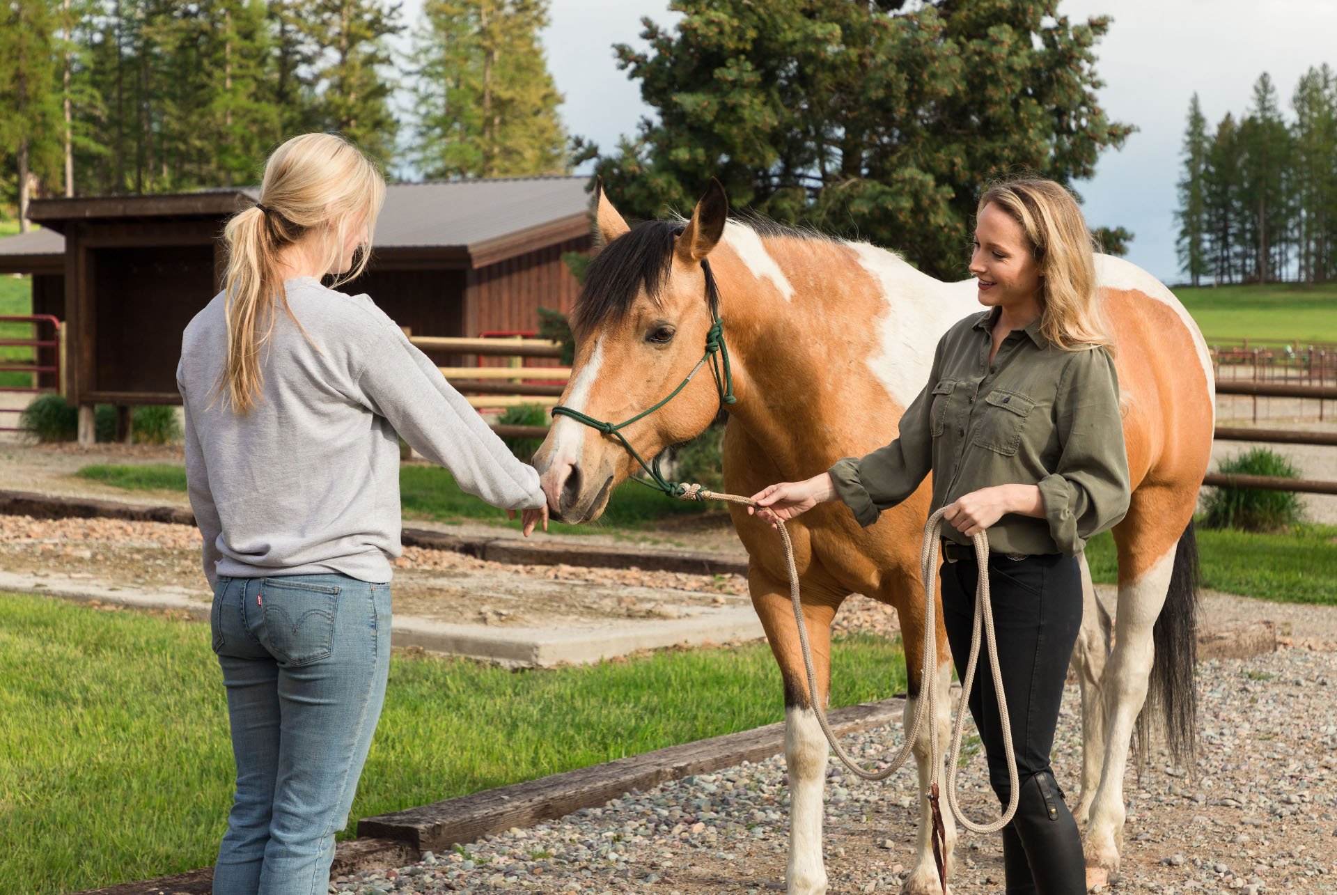 Equines for Therapy