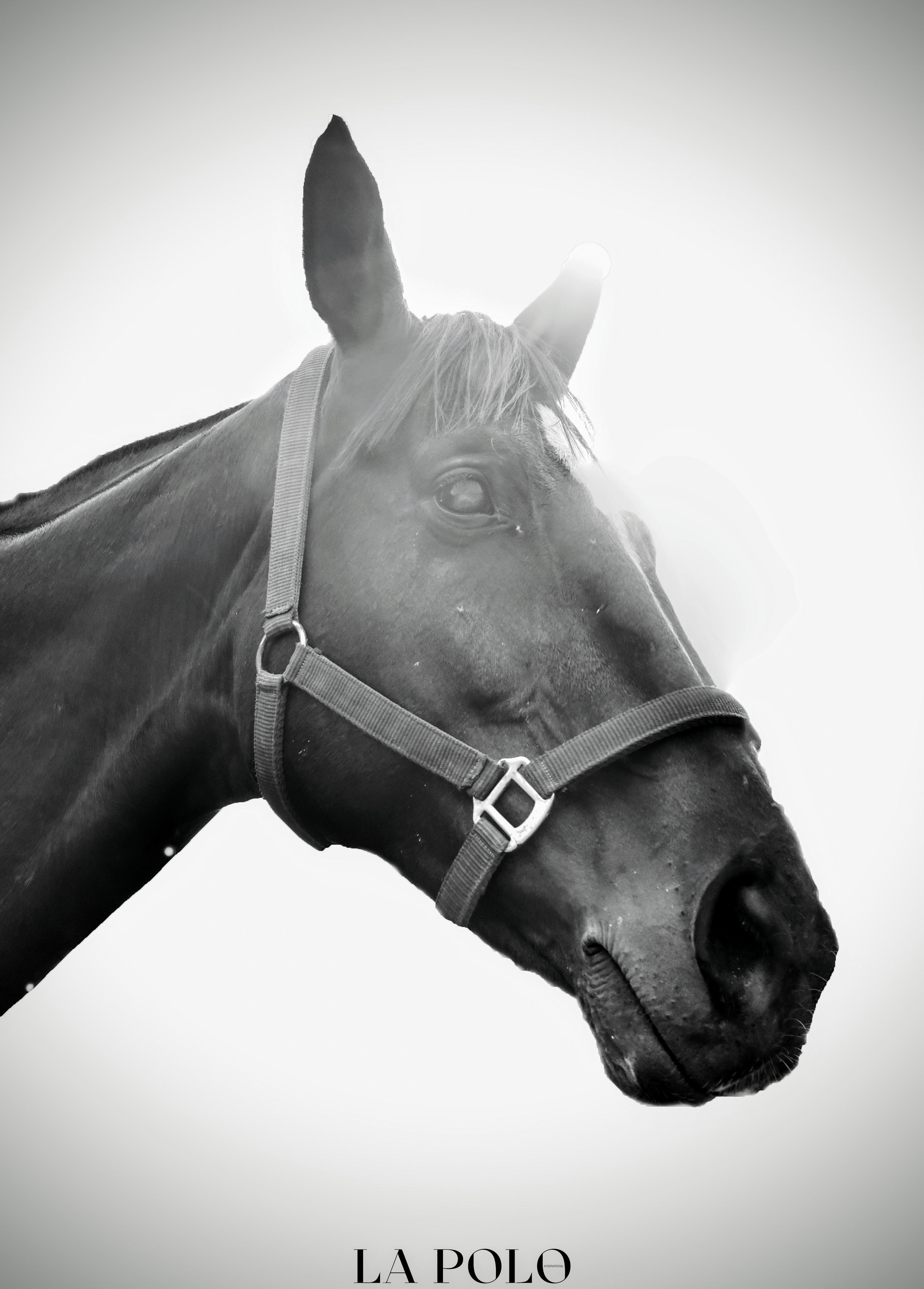 Simran Singh Shergill's Favourite Polo Pony