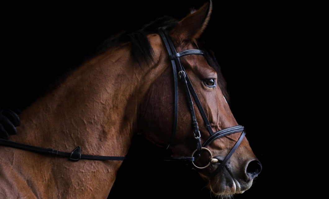 how-to-get-the-right-bit-for-horses-la-polo