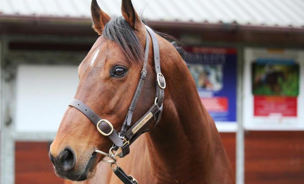 right-for-horses-la-polo