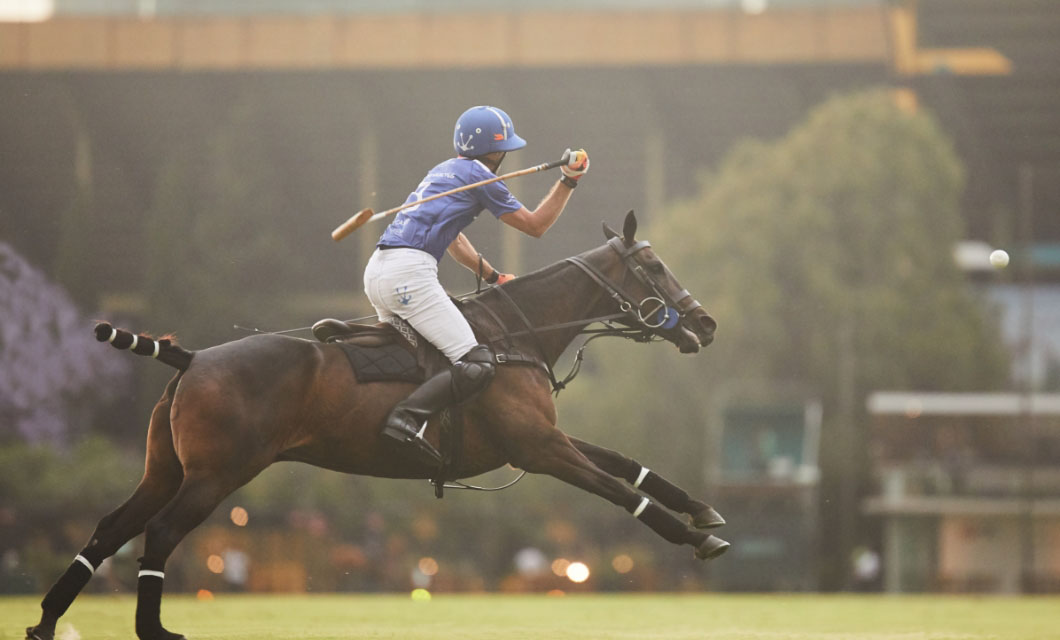 horse-photographer-la-polo