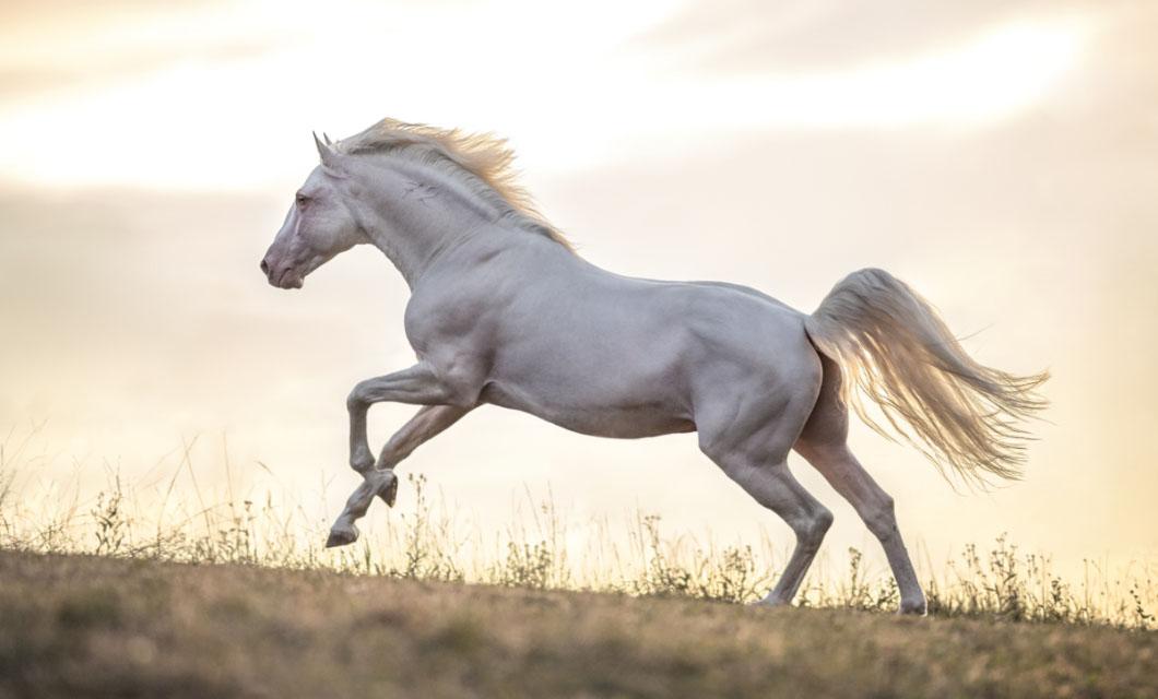 Horizontal-horse-photographer-la-polo