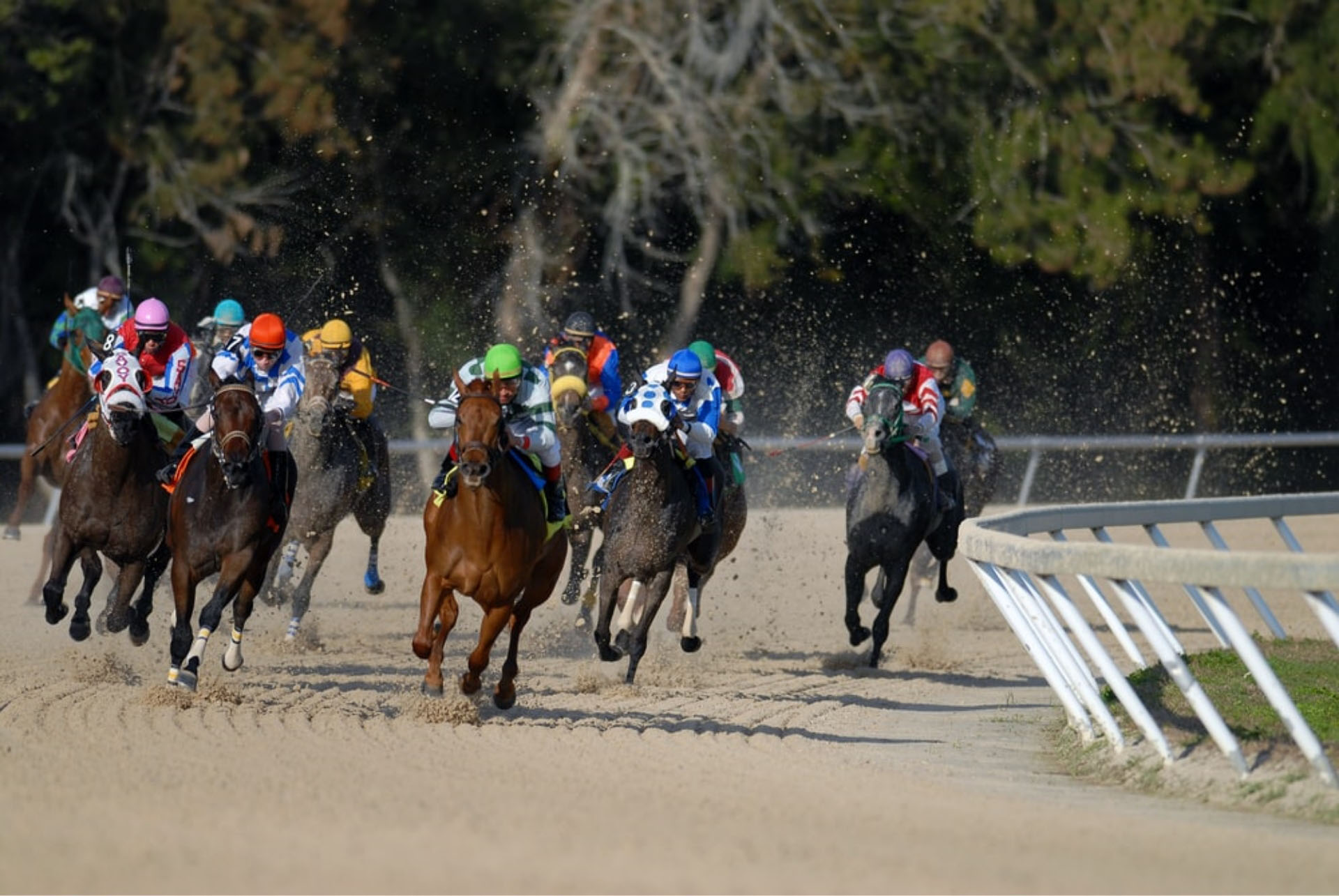 "Horse Racing with the ""new normal"" measures"