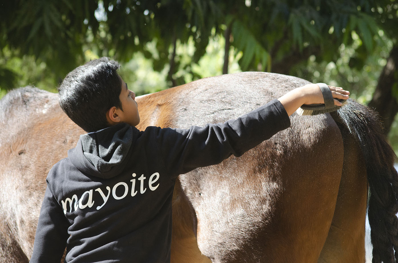 One of the horse care process also involves brushing the horse