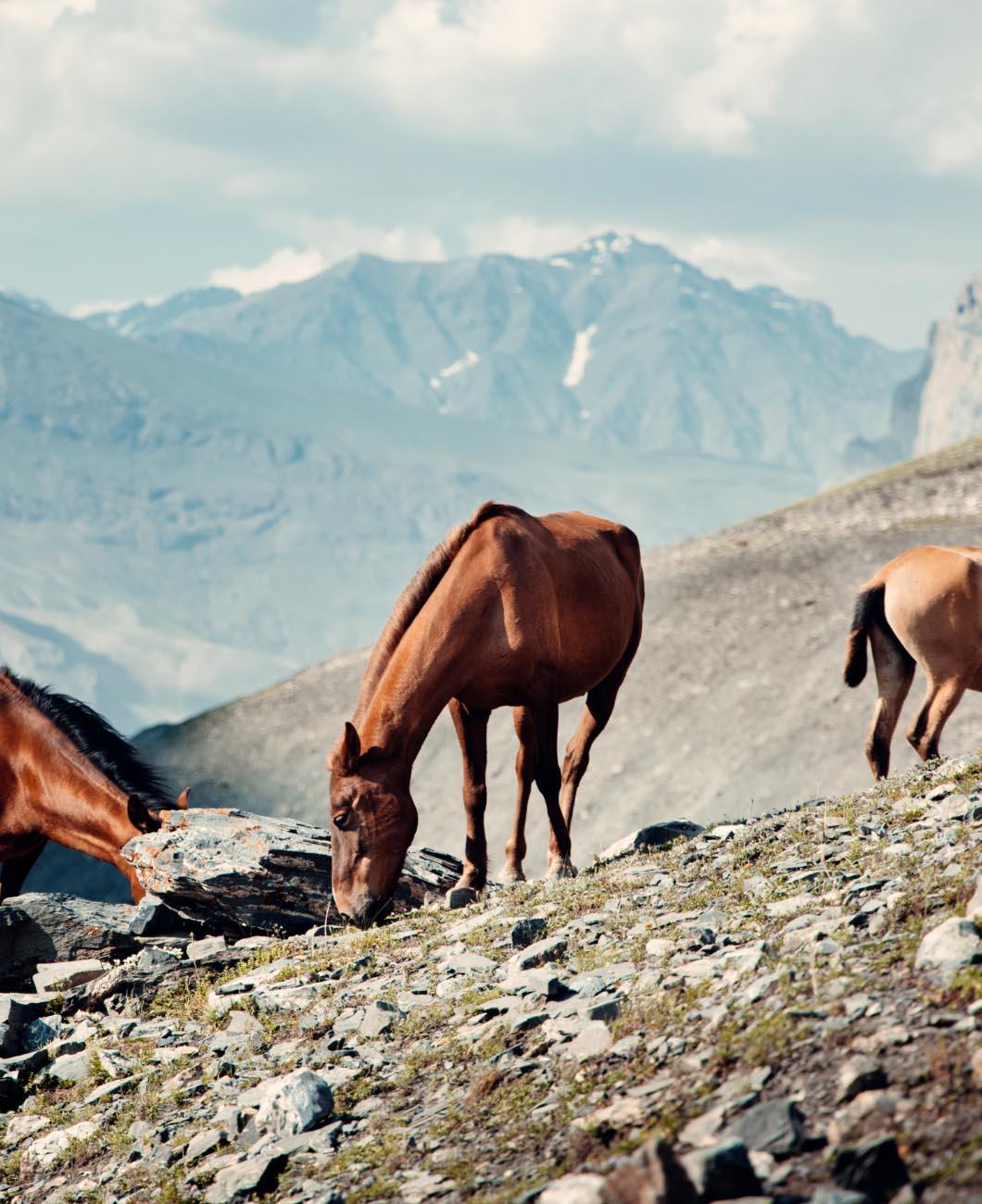 Horses_mountains_terrains_diet_La_Polo