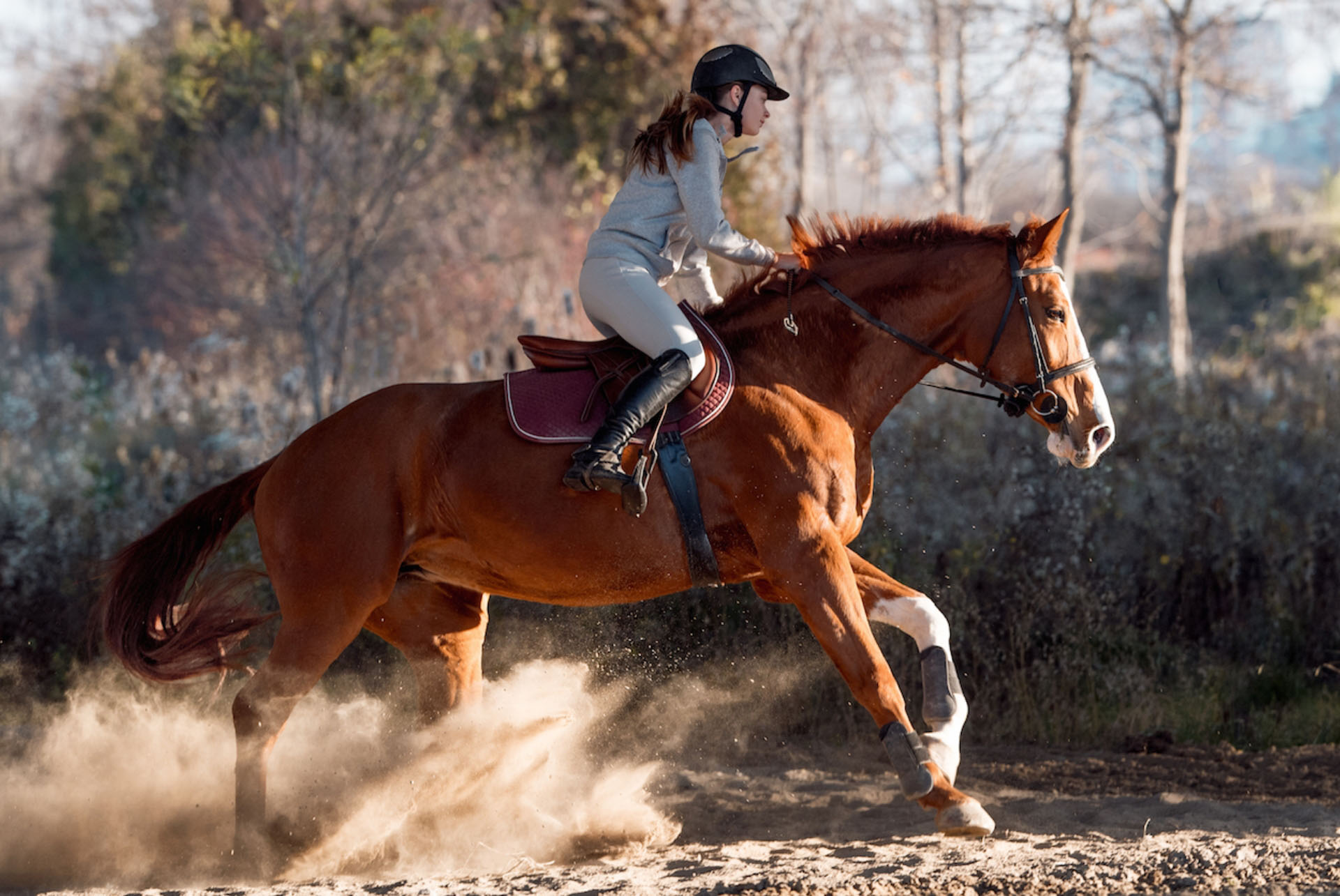Horse exercise