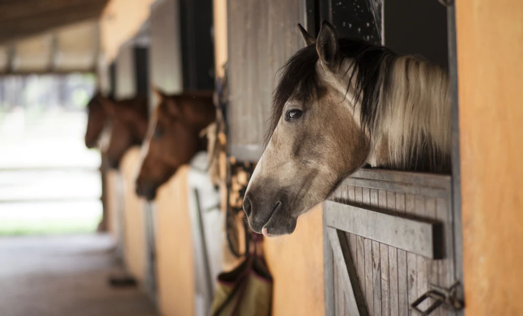 equine-life-la-polo_