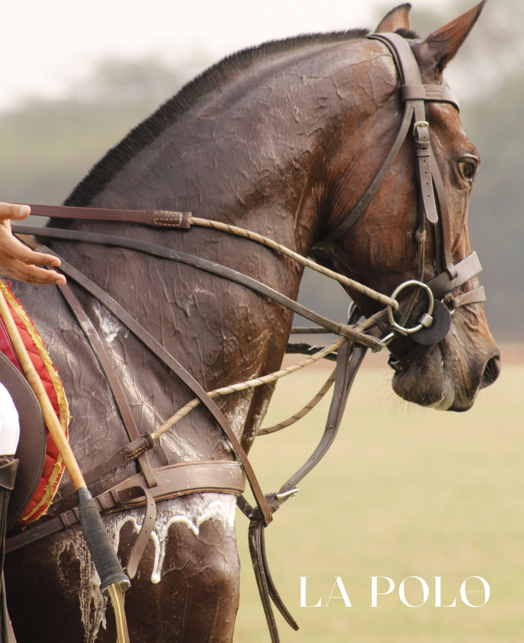 equestrian-grooming-tips