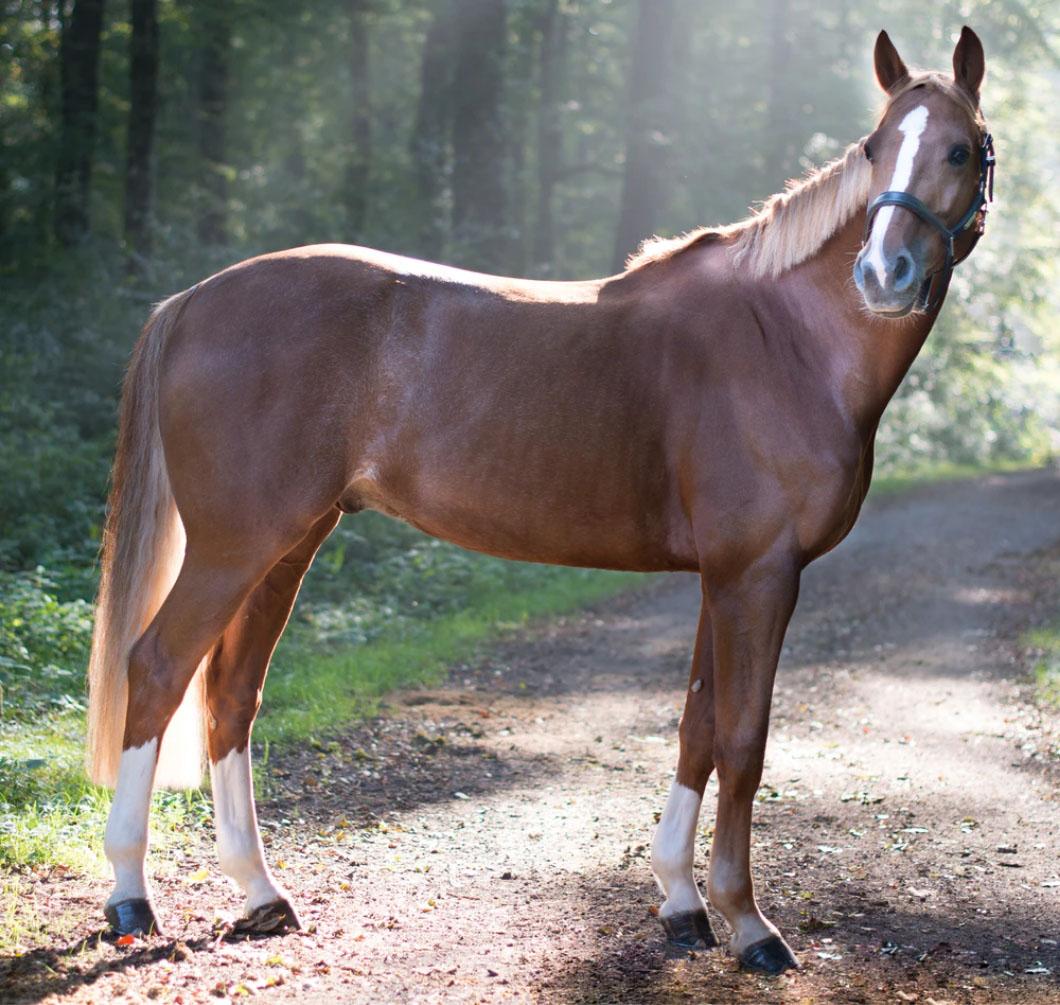 horse-love-la-polo