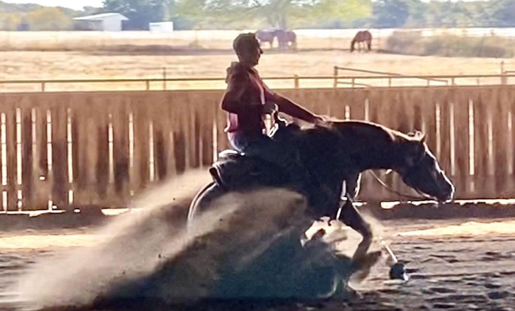horse-psychology-la-polo
