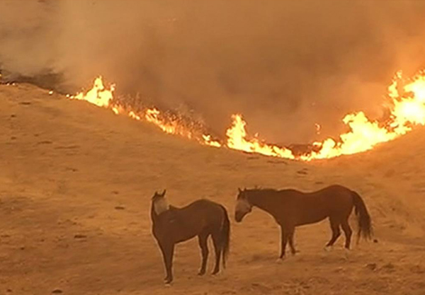 California wildfires, California fires, california fires A National disaster, Deadliest wildfires,