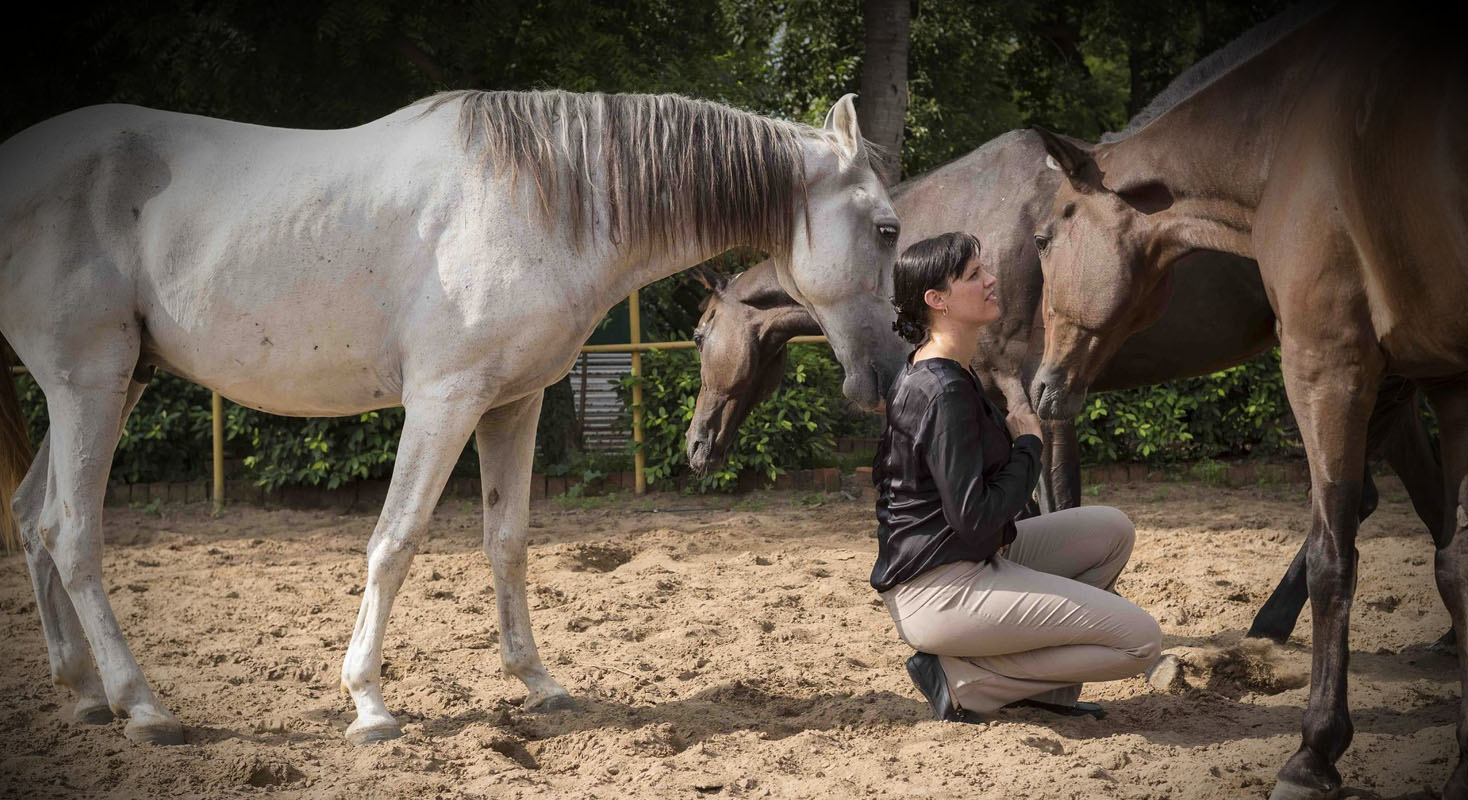 HQ leadership, horse leadership, equestrian training, isabelle hasleder, horse games, horse training