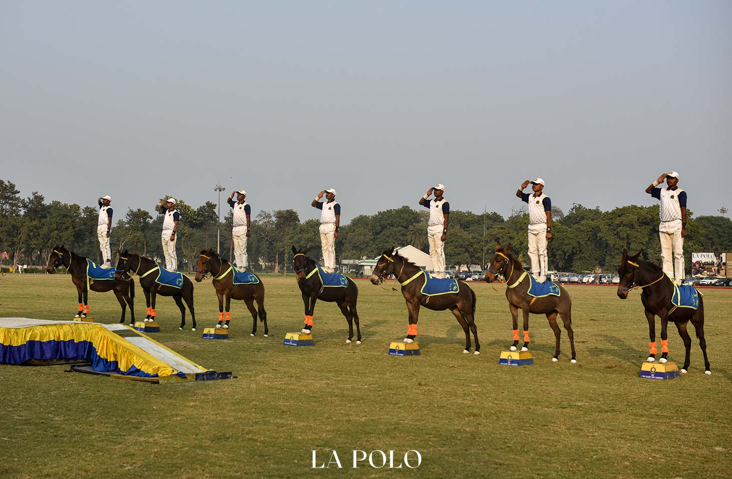 mules-people-and-discipline-lapolo