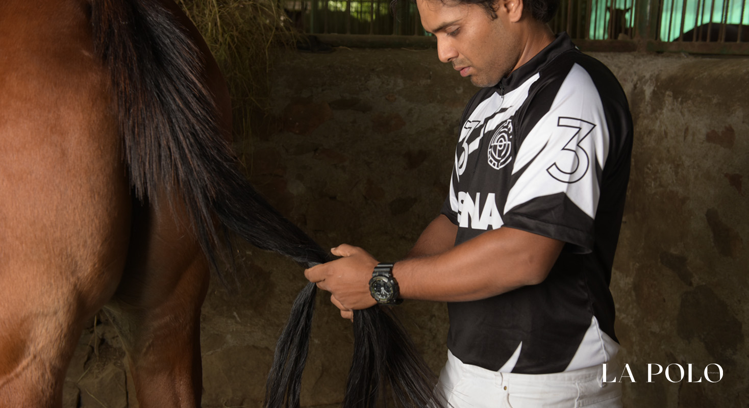 Polo Ponies , ponies , polo care ,abby ,abhimany pathak