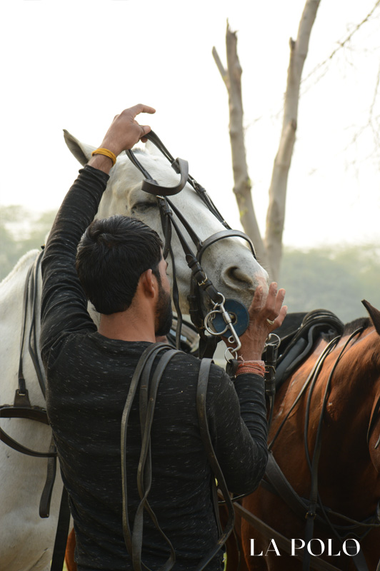 polo ponies , polo care