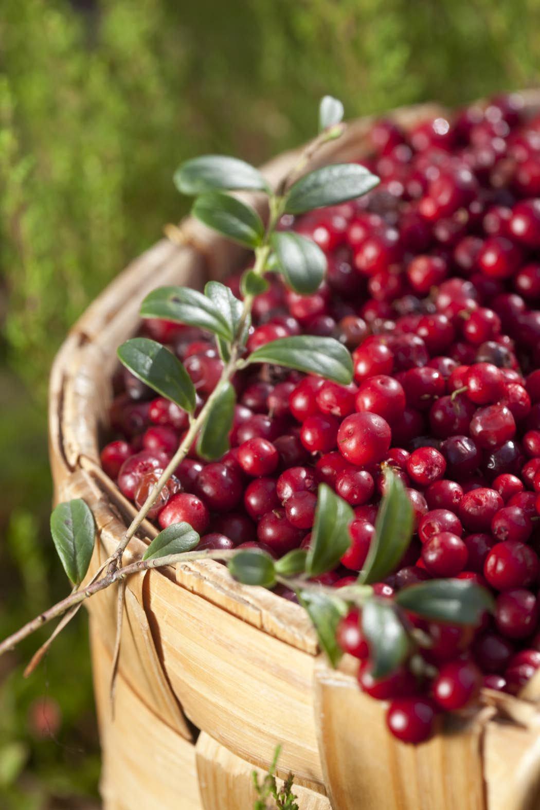 scandinavia Berries