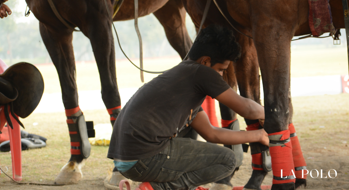 Polo Ponies , ponies , polo care