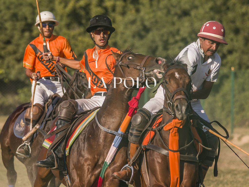 types-of-horses-polo-ponies-lapolo