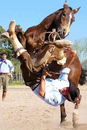 polo sport  polo accidents  all about polo  polo sport game  horse polo injuries  polo crashes  polo rules  polo falls