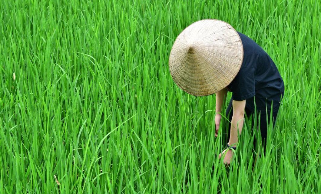vietnamese-hat-conical-la-polo-trend-fashion